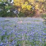 Coryell County, TX